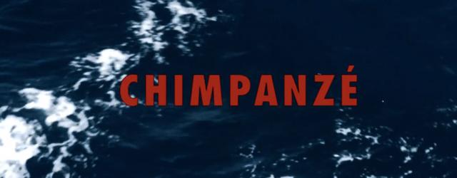 Odezenne Rien Universeul Chimpanzé Clip Vidéo